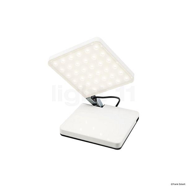 Nimbus Roxxane Fly LED
