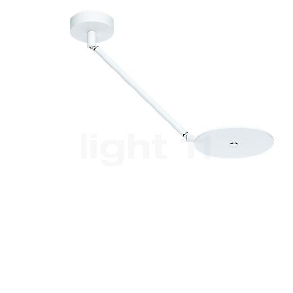 Oligo Scotty Decken-/Wandleuchte LED